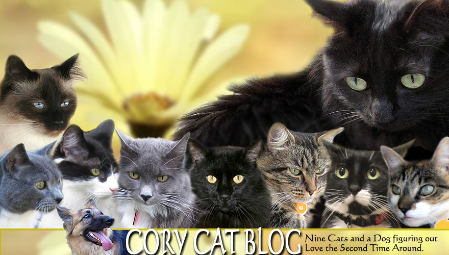 Cory Cat Blog