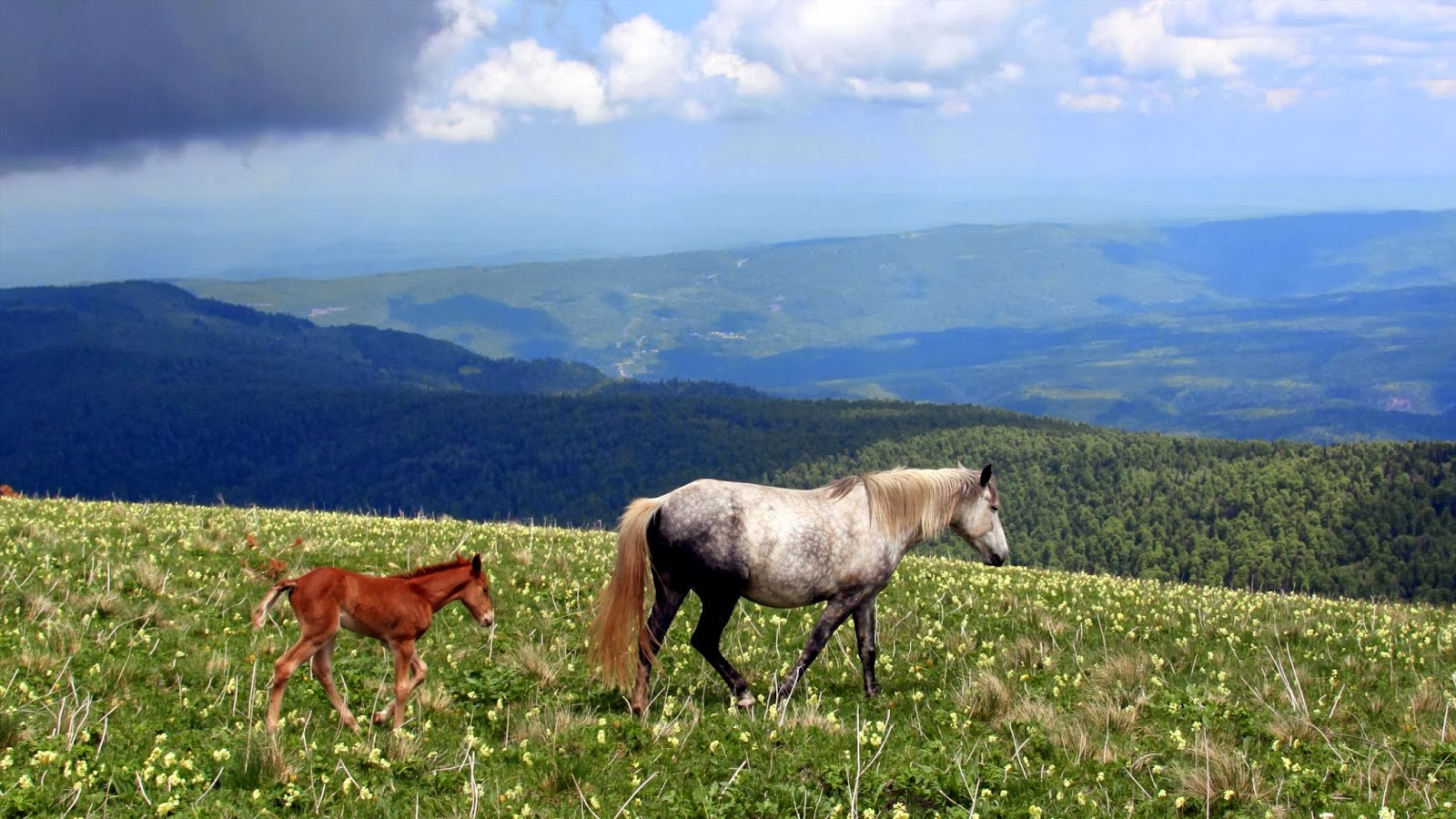 Amazing   Wallpaper Horse Landscape - 431632  2018_783975.jpg