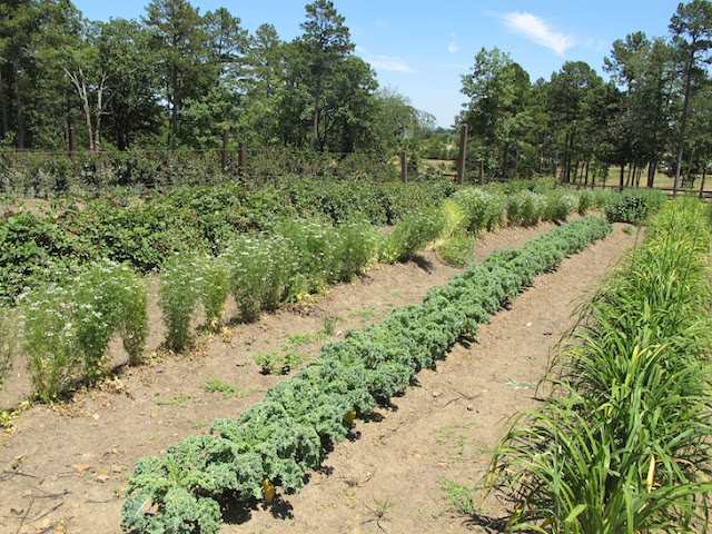nwafoodie PAllenSmith vegetables garden Moss Mountain #bean2blog soybean