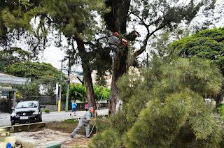 Poda de árvore na Praça Higino da Silveira