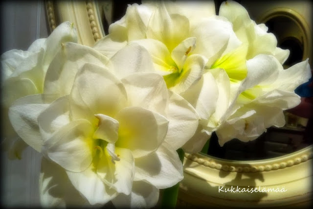 Kukkaiselämää