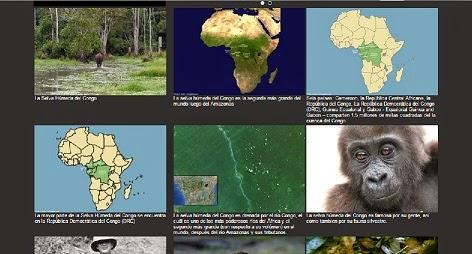 Selva del Congo