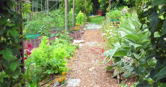 Le jardin des aurores petit tour au potager - Petit jardin culinary arts tours ...
