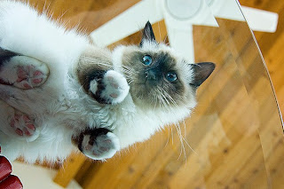 tips memotret kucing
