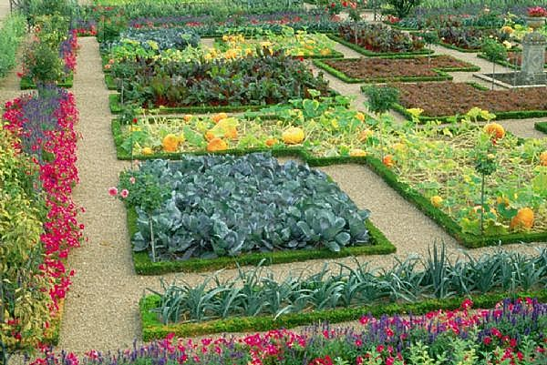Design kitchen garden ideas tips in pakistan india for Vegetable garden layout
