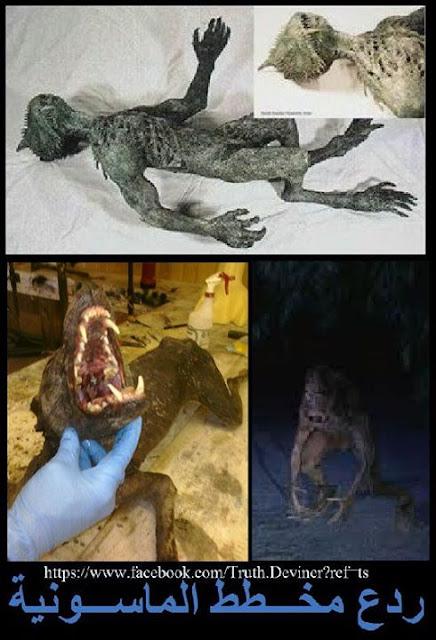احد مخلوقات الدراكونيين الهجينة.....وحش الشوباكابرا ؟ CHUPACABRA