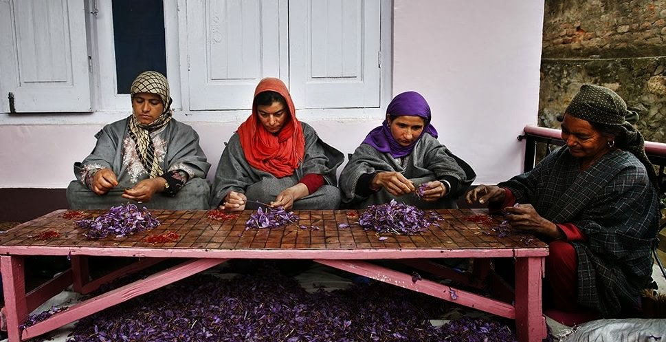 Agriculture, Cultivation, Expensive, Farmer, Field, Flower, Food, India, Kashmir, KG, Most, Pakistan, Pampore, Saffron, Spice, Srinagar, USD, Women, World,