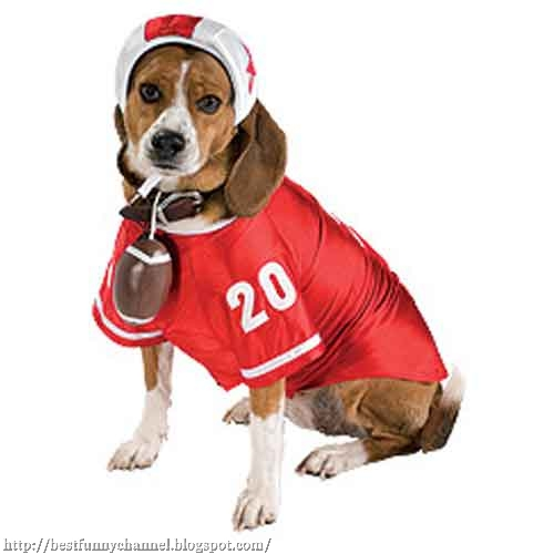 Dog American football player.