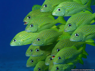 fishes hd wallpapers.jpg