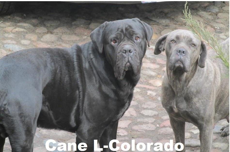 Cane-L-Colorado