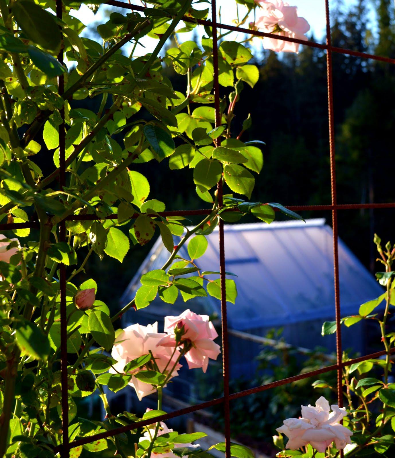 Rosenträdgården i Hult