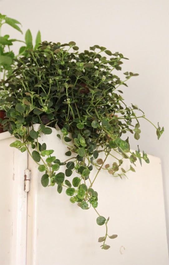 Déco plantes vertes cuisine vintage home