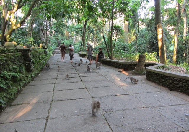 Bali Tour Land Only 3 hari 2 malam - Monkey Forest
