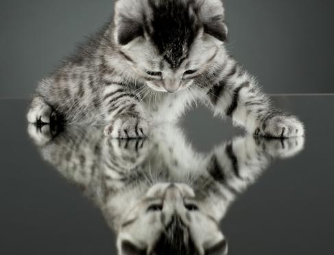Красивые фотографии животных ZooPicture  - самые красивые картинки животных