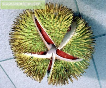 Durian Langka Unik Berwarnakan Merah
