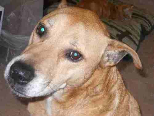 Sammy, a mixed breed dog looking for a forever home in Southern CA