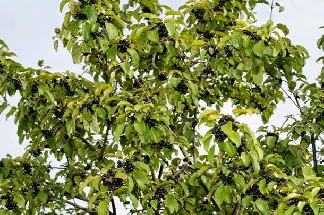 Mon arbre le de vivre le douaire tout savoir sur la for Tarif taille de haie au noir