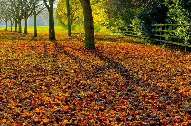 http://www.publicdomainpictures.net/view-image.php?image=27774&picture=autumn-landscape