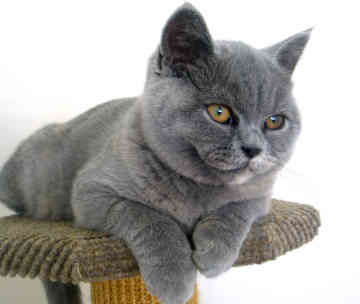 Cat Breed