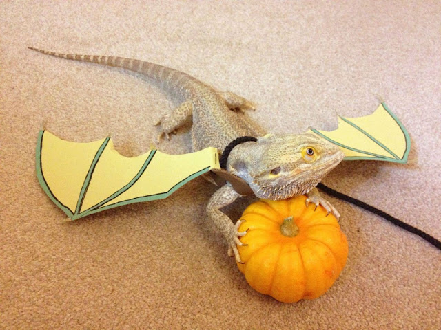 lizard wears attached wings, funny animal pictures, animal photos, funny animals
