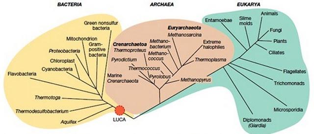 Pohon filogeni kehidupan hasil sekuensing gen rRNA