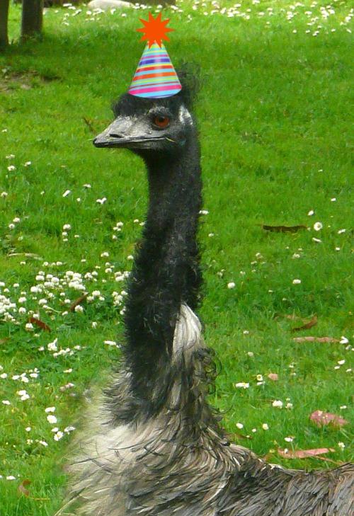 I Am NOT An Anteater Belated Birthdays Otter Emu Mandrill
