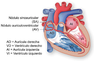 dibujos del corazon