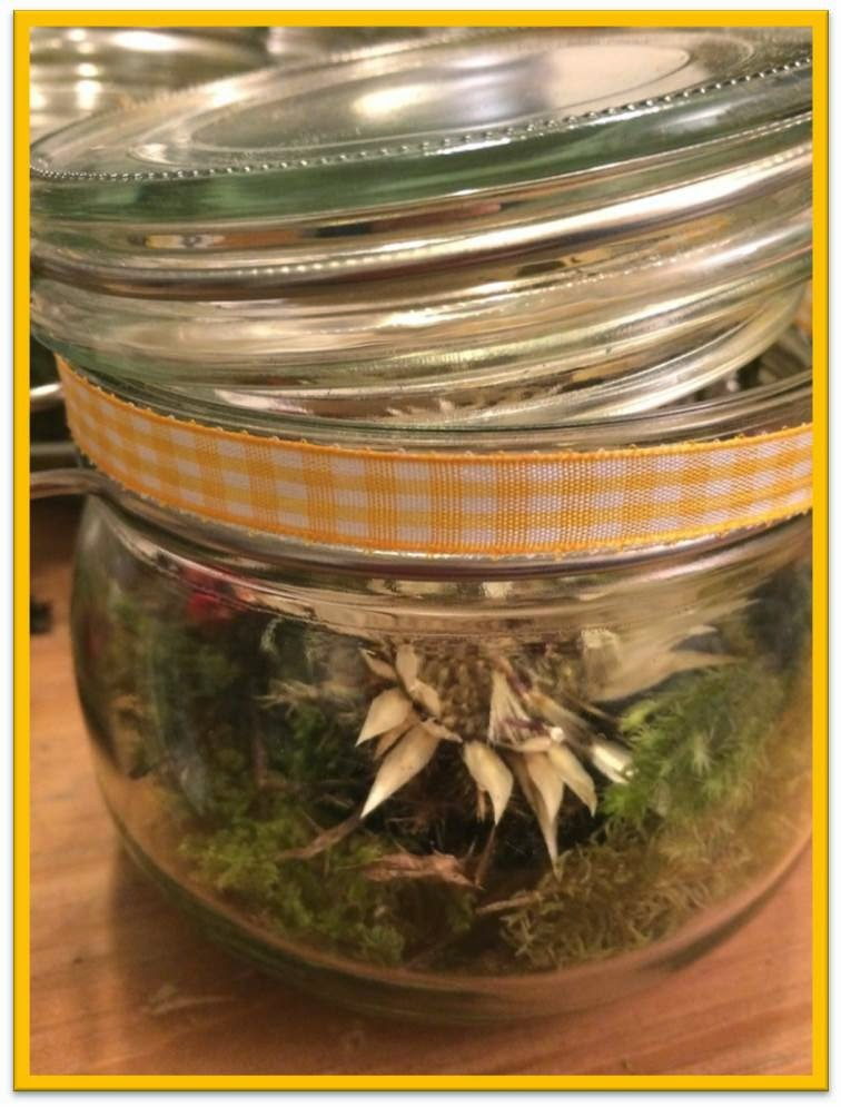 Bsundrig herbstdeko im glas for Herbstdeko im glas