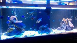 Giant Aquariums: ♦ ♦400+ Gallon Acrylic Reef Ready ...