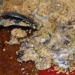 Gratin de ravioles au poulet, champignons et courgettes (voir la recette)