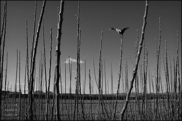 fotografia,naturaleza,carpesa,paisaje