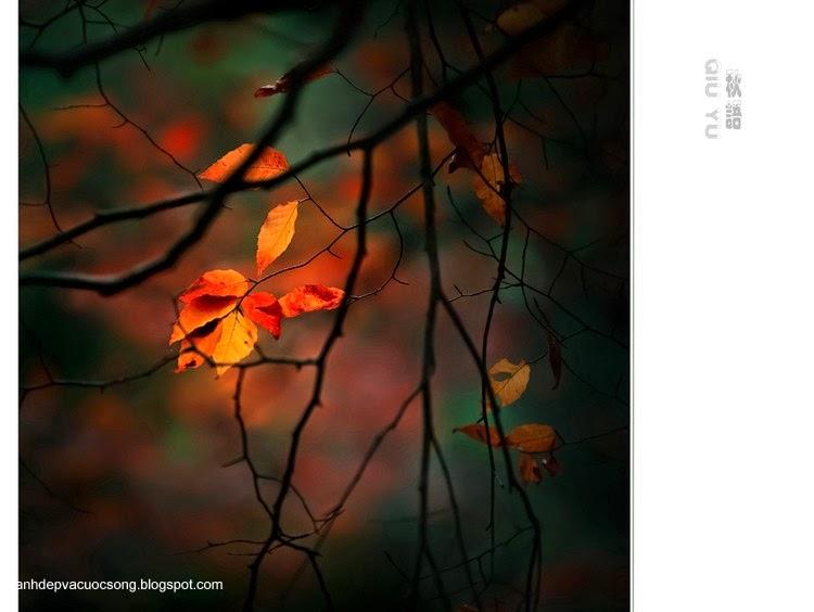 Chiếc lá mùa thu 8