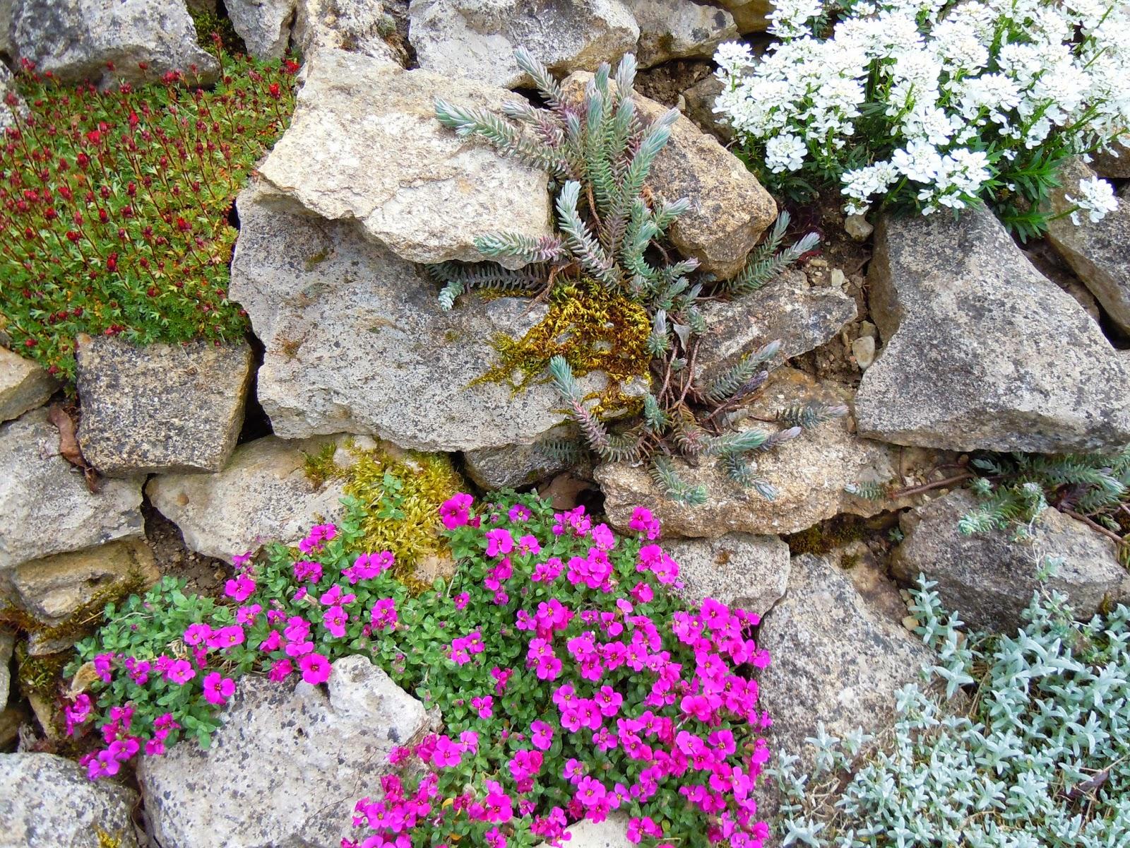 Chaque jour coute une fleur un printemps en avance for Fleurs de rocaille vivaces