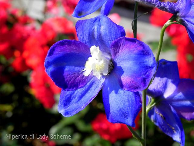 hiperica_lady_boheme_blog_di_cucina_ricette_gustose_facili_veloci_fiore_azzurro