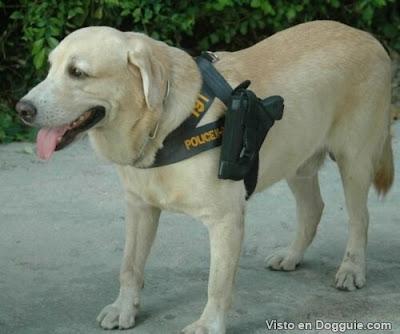 Cachorros armados Tailândia