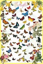 BUTTERFLIES