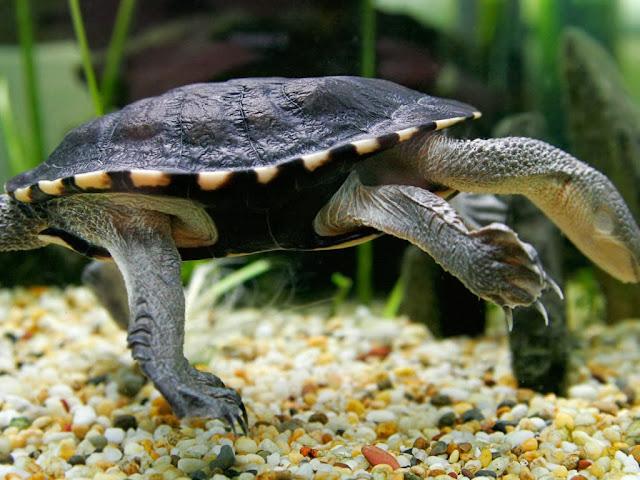 """<img src=""""http://1.bp.blogspot.com/-_G3iHpEvsDs/UrAUx4GFVPI/AAAAAAAAF1E/jqHpP8OdbSk/s1600/rtyrrr.jpeg"""" alt=""""Reptiles Animal wallpapers"""" />"""