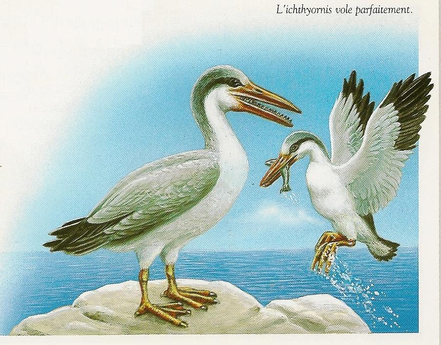 the most important thing to remember if you want to think of the living form of ichthyornis though is that it was very much like a modern seagull in terms