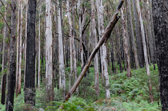 trees on dandenong creek track