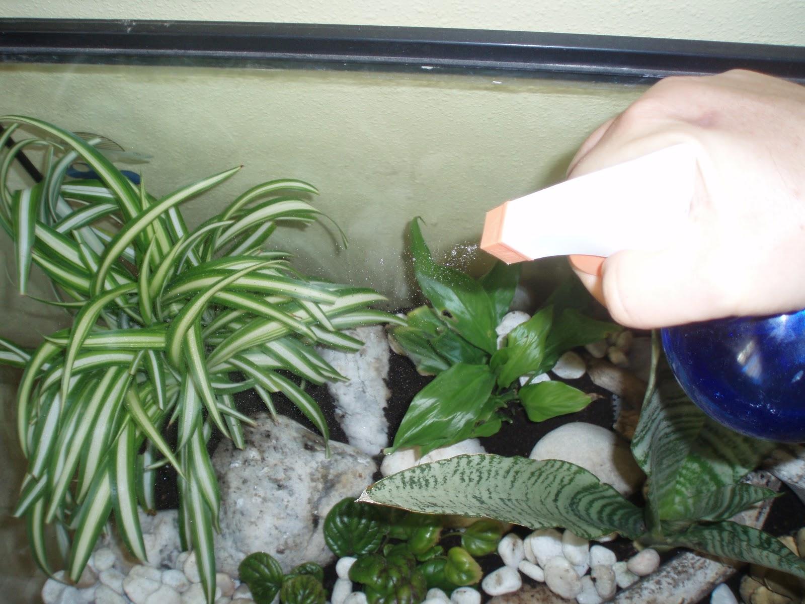 Crear un jard n terrario en una pecera for Peceras de jardin