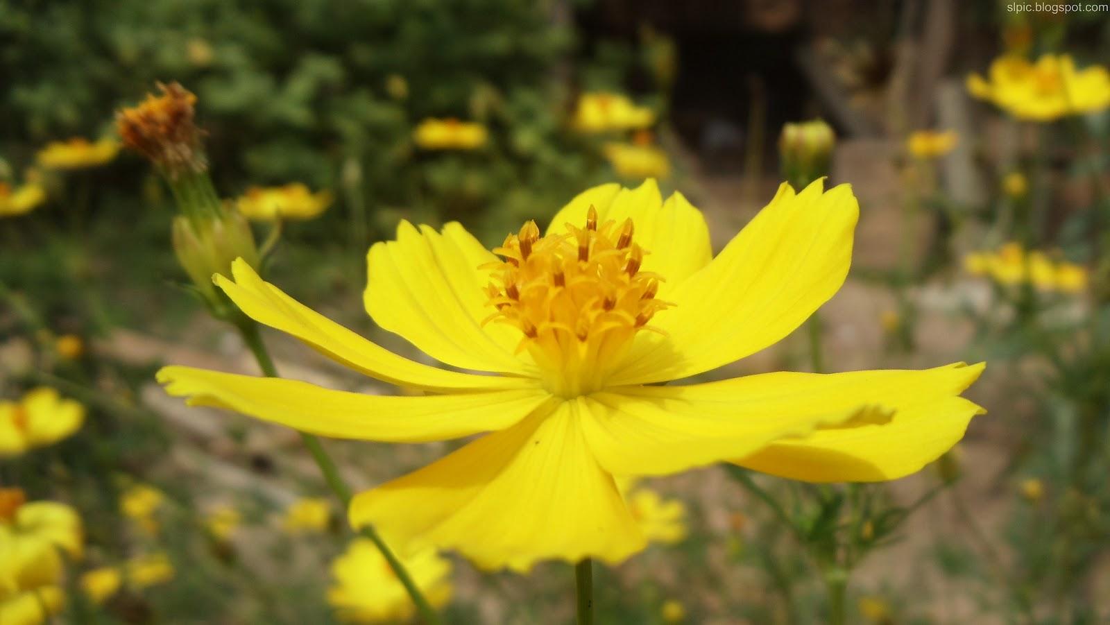 http://1.bp.blogspot.com/-_H0S8Qp1qvA/UBInPDUQgOI/AAAAAAAAKkw/XHFxATBkYbk/s1600/Srilanka+Various+Flowers+And+Nature++(3).JPG