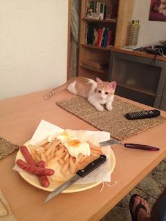 gatita umi estirada en la mesa al lado de la comida