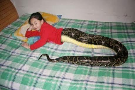 gadis ular, thailand, berita, pelik