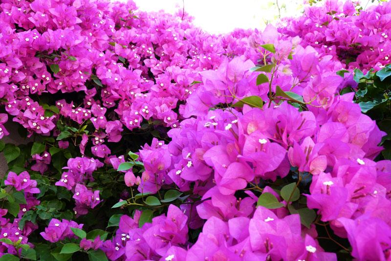 Я люблю яркие картинки!: Цветы Турции: dansuu.blogspot.com/2011/07/blog-post_8229.html