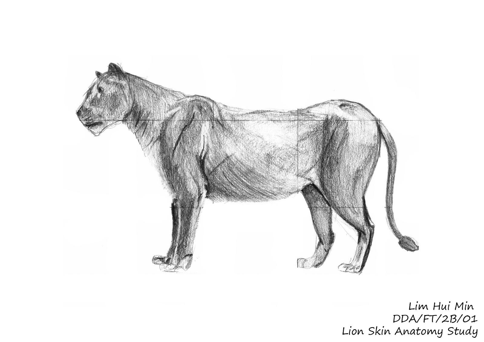 Lim Hui Min Portfolio: Animal Anatomy: Cat