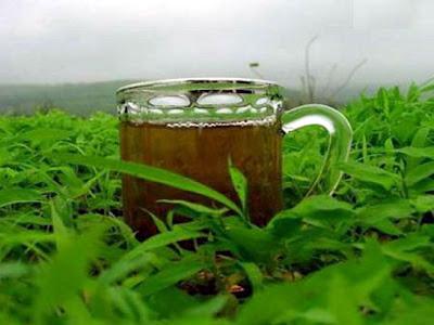 الشاي الاخضر و الشاي الأسود green tea Black tea