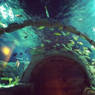 TheJungleStore.com Blog | Kansas City Sea Life Aquarium Underwater Tunnel