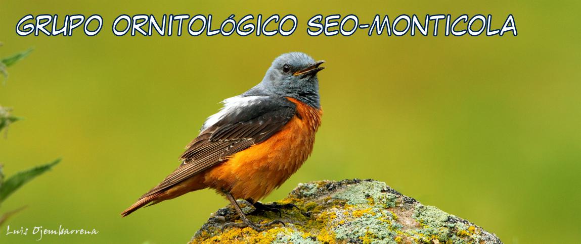 GRUPO ORNITOLÓGICO SEO-MONTICOLA