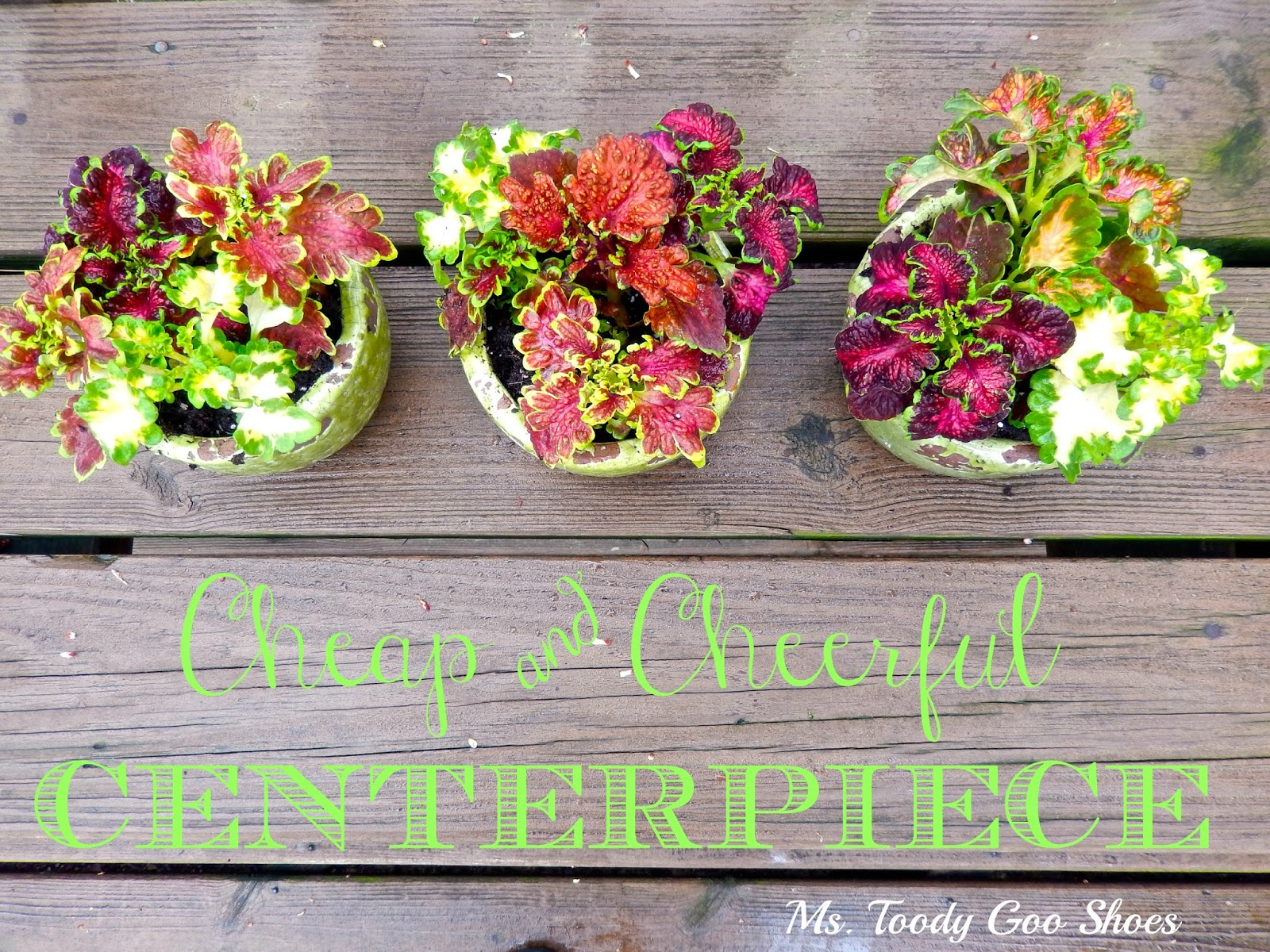Ms Toody Goo Shoes Cheap Cheerful Centerpiece
