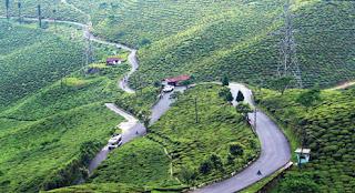 Tea garden in Darjeeling hills